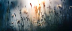 Miljø, kvalitet og etiske retningslinjer for Wittusen & Jensen