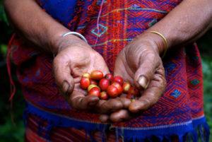 Fairtrade - Wittusen & Jensen